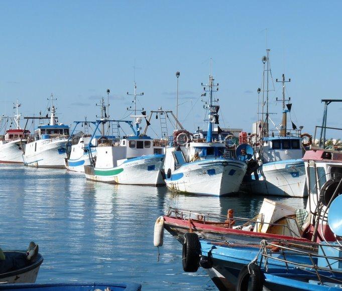 Sequestrate due tonnellate di pesce al Porto di Trapani