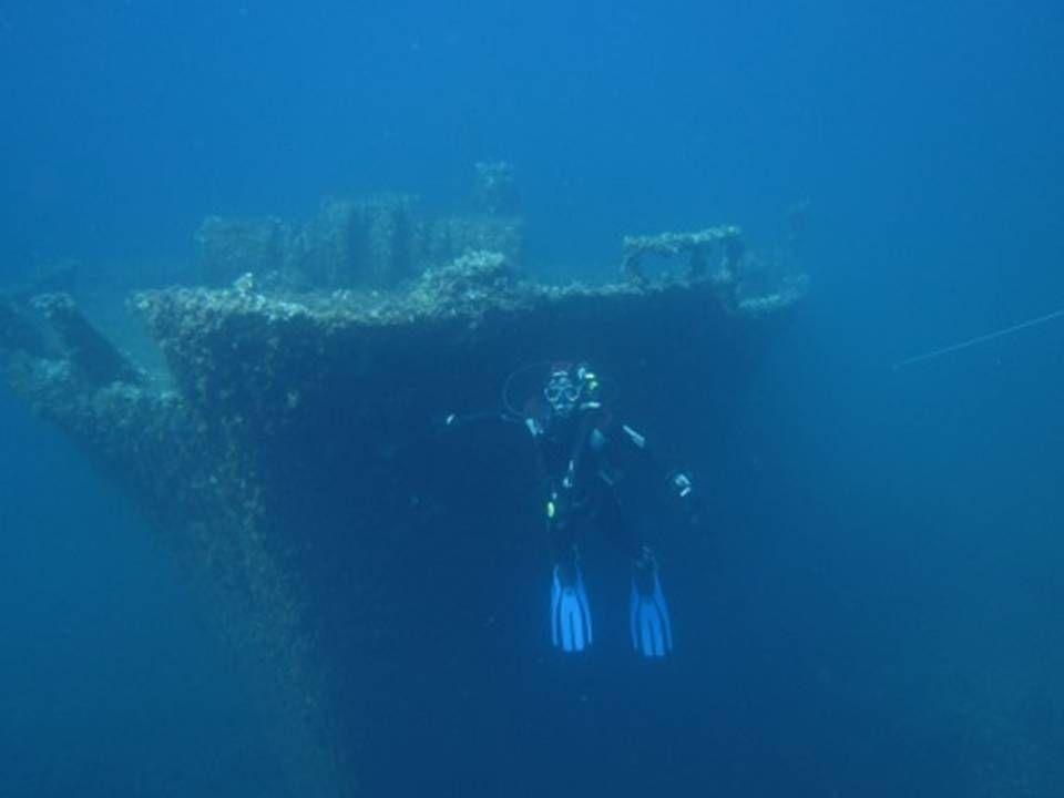 Posidonia nei relitti sommersi delle isole Egadi