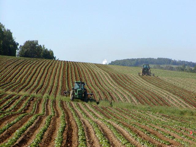 Petrosino: domani assemblea degli agricoltori