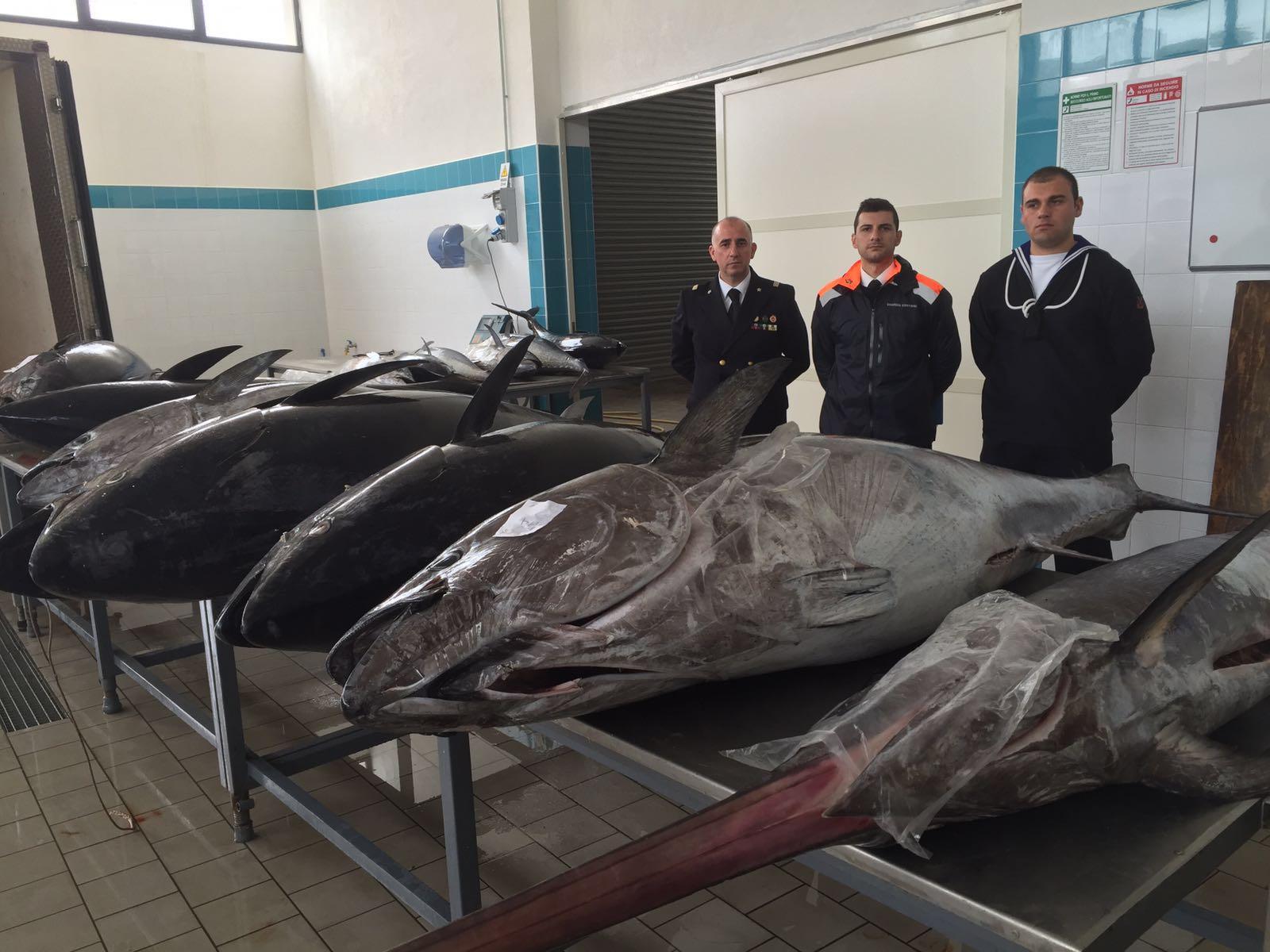 Maxi sequestro di tonno rosso a Pantelleria, Marsala e Palermo