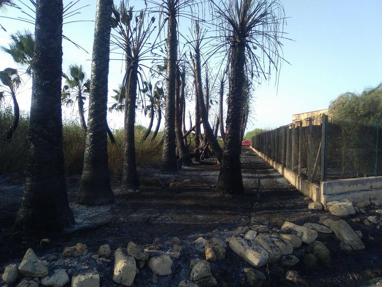 Incendio in contrada Giunchi, distrutto bosco di palme. Le fiamme raggiungono le abitazioni