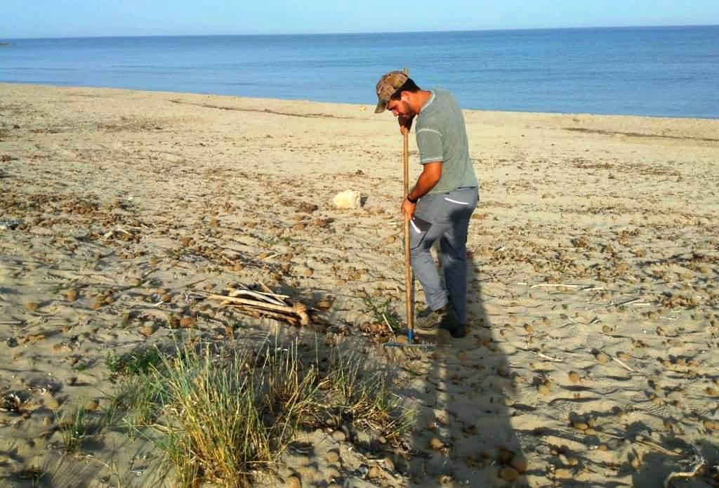 """Prosegue la pulizia delle spiagge marsalesi. Ma la legge ricorda: """"Non è possibile rimuovere la posidonia"""""""