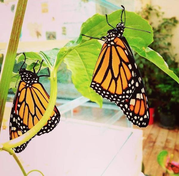 A Marsala approda la Casa delle Farfalle. Paradiso tropicale urbano a San Pietro