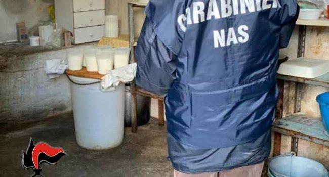 Custonaci: controlli alla filiera del latte, i Nas scoprono un caseificio abusivo