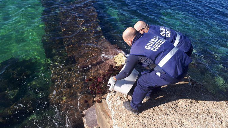 Sequestro di ricci di mare, Circomare eleva migliaia di euro di multe