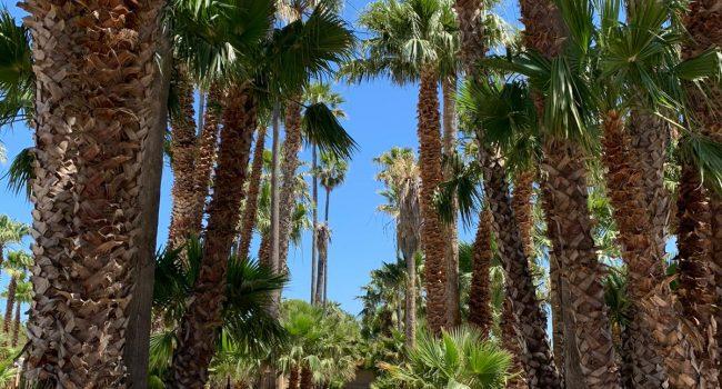 Villa Genna, campeggio o sosta camper? risponde il gestore Tommaso Favata