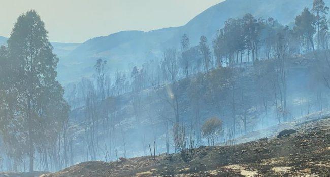"""Incendio sul monte Inici, in fiamme 500 ettari di bosco. Il sindaco di Castellammare: """"Ennesimo gesto vile"""""""