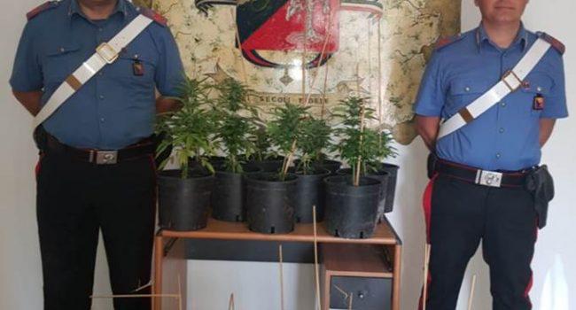 Marsala: 75enne coltiva 24 piante di marijuana, per lui obbligo di dimora