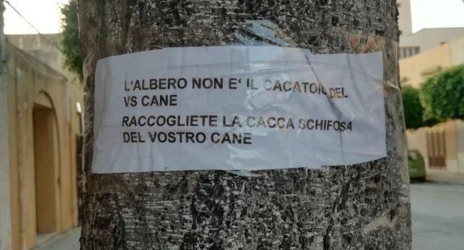 Marsala: negli alberi di via Pascasino un… invito ai padroni dei cani