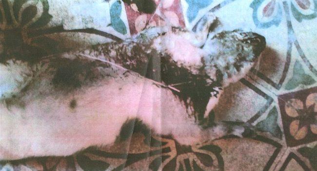 """""""Hanno massacrato di botte il nostro gatto"""": la denuncia di due coniugi marsalesi"""