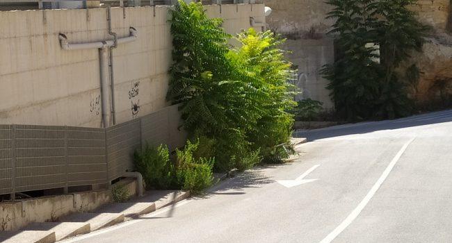 Il paradosso del verde pubblico a Marsala