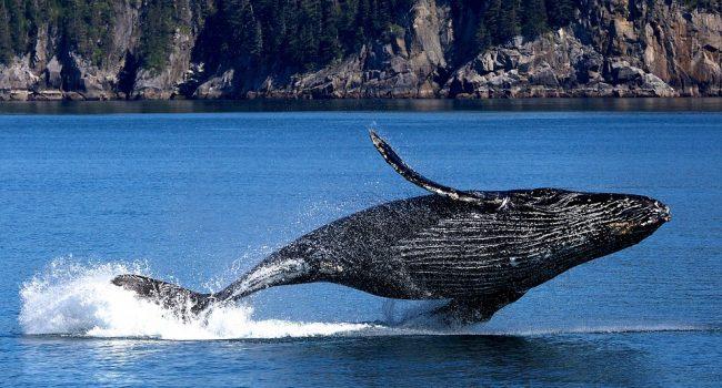 California: balena inghiotte due donne   VIDEO