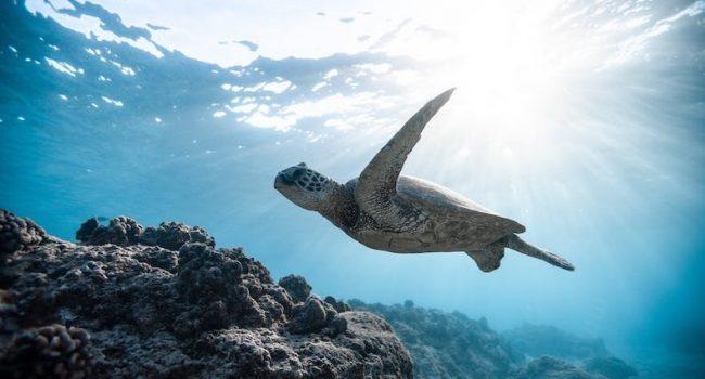 Generazione Oceano per l'ambiente, il progetto Nauticinblu arriva anche a Trapani