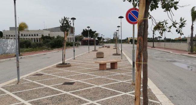 Nuovi alberi piantati a Petrosino per arricchire il verde pubblico